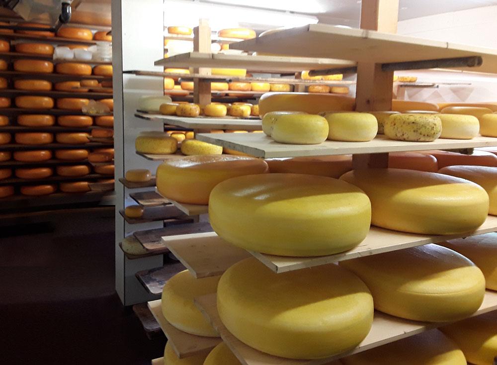 kaas van familie van schie winnaar lekkerste kaas